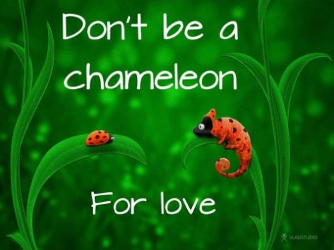 Chameleon for love