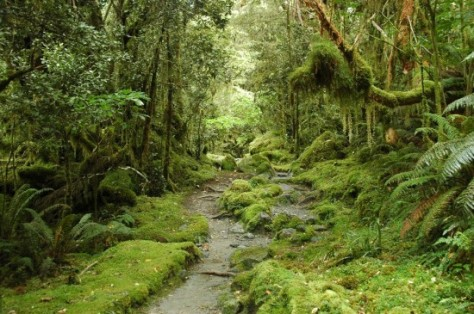 new-zealand-forest-550x365
