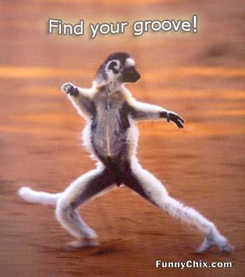 Funny meerkat pictures - photo#28