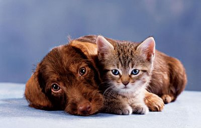 cat_and_dog01